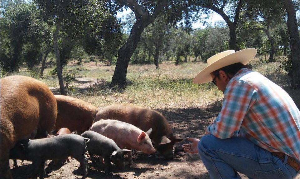 Rancho Guacatay alimentando al ganado