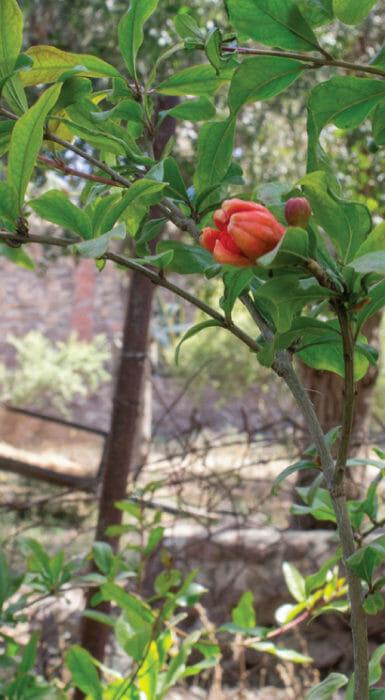 Frutos de Rancho Guacatay