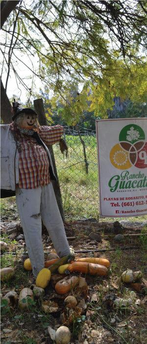 Espantapajaros de Rancho Guacatay