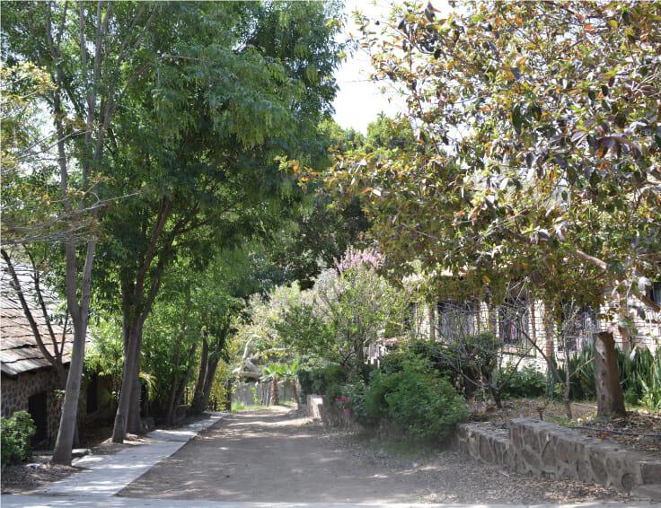 Camino de Rancho Guacatay
