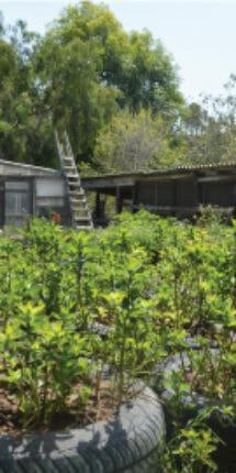 yerbas aromaticas de Rancho Guacatay